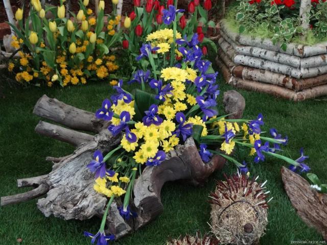 Výstava kvetov v Olomouci Flora
