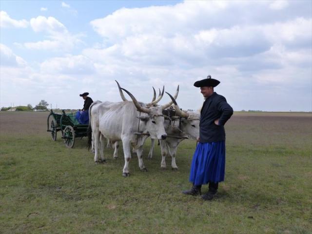 Čaro maďarskej pusty