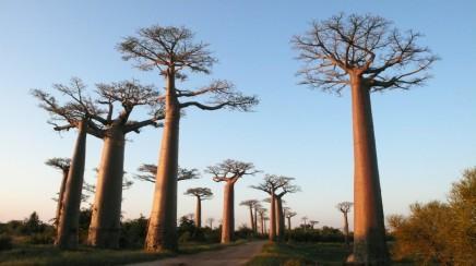 Madagaskar, Jar, Lesotho, Svazijsko, Mozambik