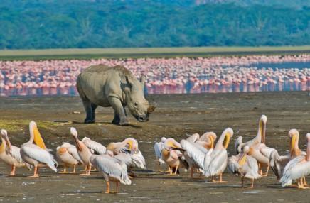 Keňa - Safari a oceán