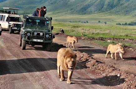 Safari v Afrike