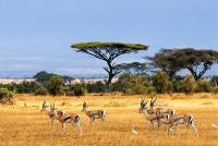Zanzibar a třídenní Selous Safari